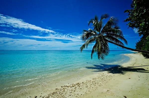 Palm Tree Beach 1
