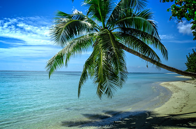 Palm Tree Beach 2