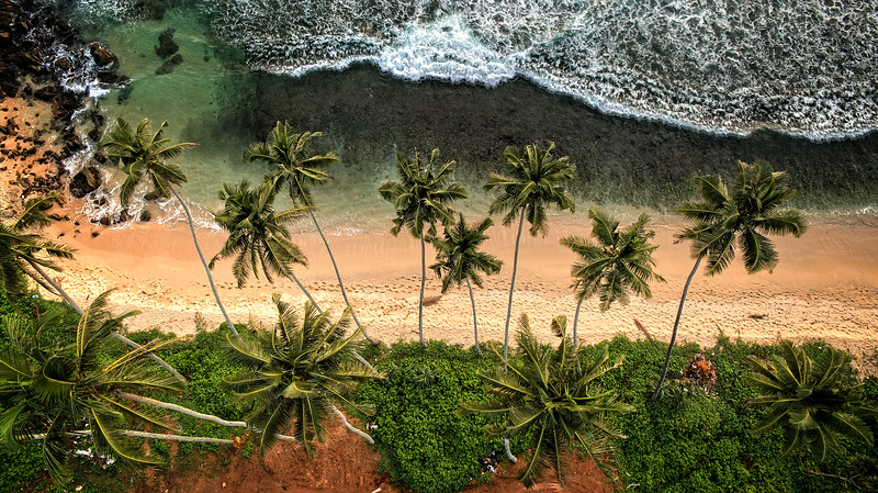 Vijaya Beach Palms