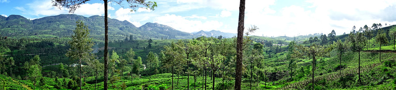 Ceylon Tea Trails Valley  Panoramic