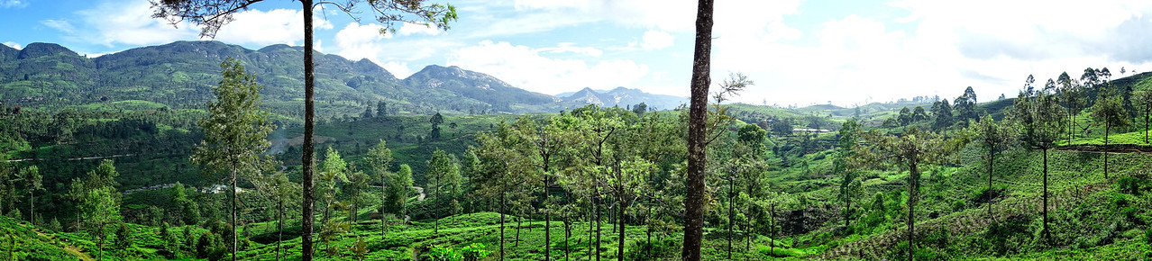 Ceylon Tea Trails Valley  Panoramic
