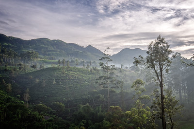 Ceylon Tea Trails Valley