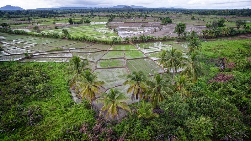 Kandalama Rice Paddies