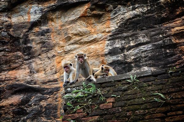Sigiriya Rock Watchers