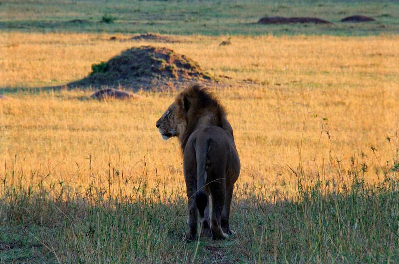 Lion Sunrise Lookout