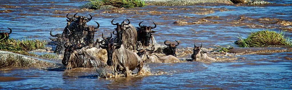 Mara Crossing 2