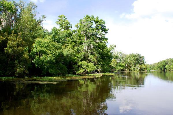Jean Lafitte Swamp