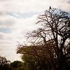 Baboon Treet Top