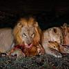 Lion Impala Kill 1
