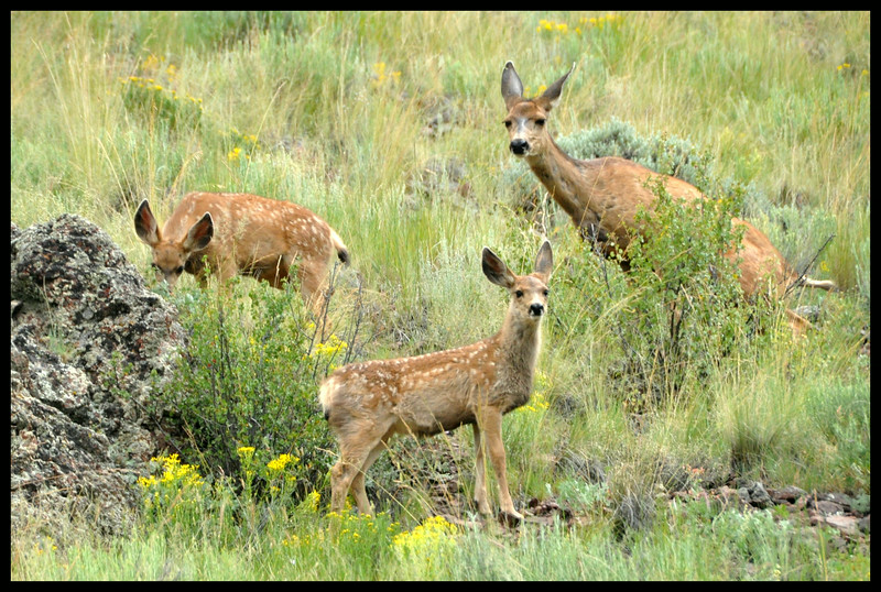 Twins - Two Fawns and Mama Peeing