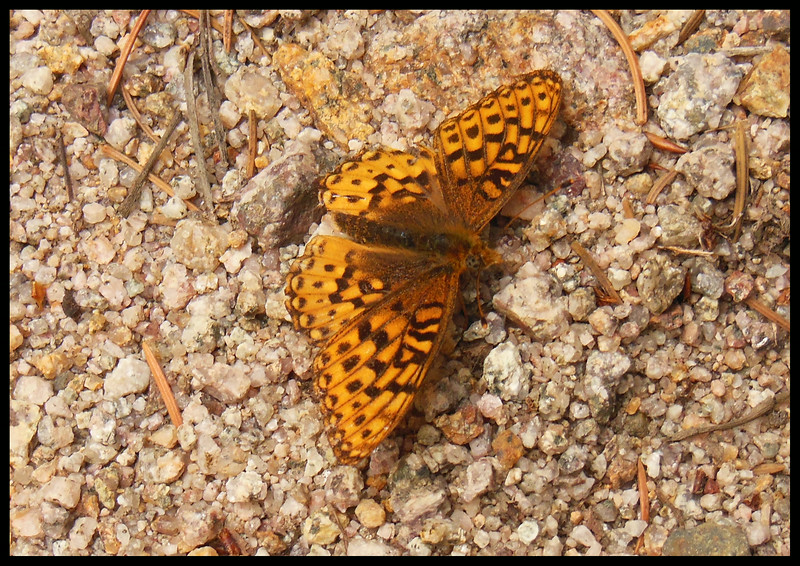 Moth (Photo by IM)
