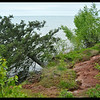 Tree Erosion - Tree sliding/Slumping into Lake Superior