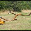 Snakes as Roadside Art
