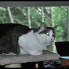 Zandi (the foster cat), enjoying Kansas