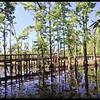 Boardwalk in the Swamp.