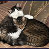 Zandi and Zeus Cuddling on the Bed