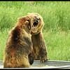 Bear Kissing (Photo by IM)