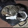 Zane and Zandi in my Computer Bag