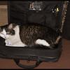 Zandi in Computer Bag