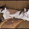 Sleepyheads Zandi and Rambo on the Bed