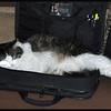 Zandi in the Computer Bag
