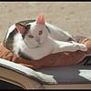 Rambo on the Dashboard
