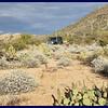 JW in Desert Mountains