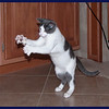 Hutch Dancing with his Cat Dancer Toy
