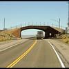 Bridge for Migrating Wildlife