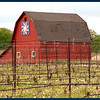 Vinyards around little red barn.