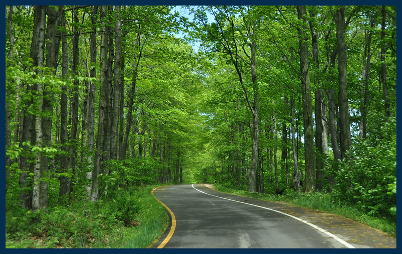 A tree lined road.