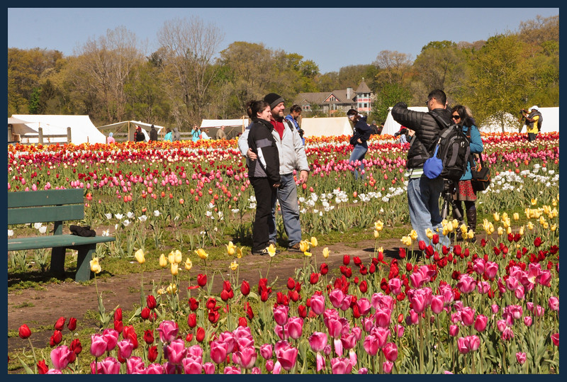 """Another """"people pose"""" in the tulips."""
