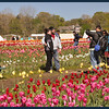 "Another ""people pose"" in the tulips."