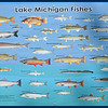 Fish of Lake Michigan.