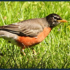 Robin the Hunter