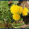Plant life at Iargo Springs (Wildflowers)
