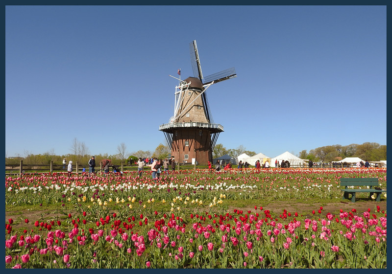 An authentic windmill shipped to Michigan from Holland, The Netherlands (the brick base below the windmill was added to get the windmill blades up where the Michigan wind is located).