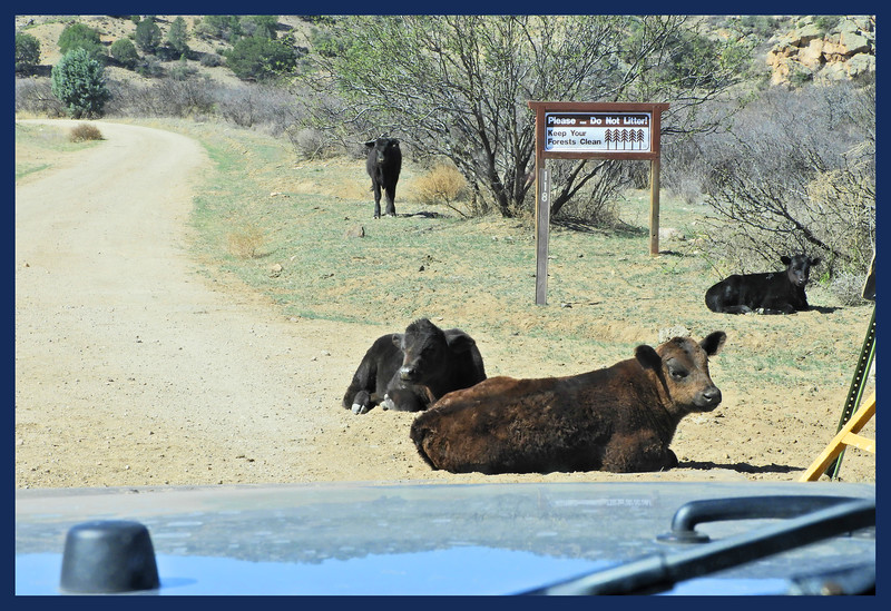 """Saddle Rock Road - with """"Road Hazards."""""""