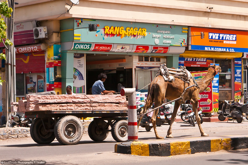 All sorts of transportation will be seen on Jodhpur's streets.