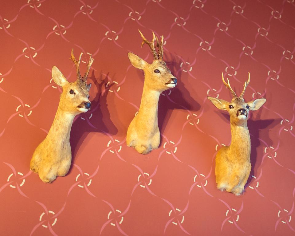Deer at Villa Ammende, Parnu