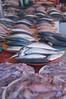 Kuching, Malaysia. Local fish market.