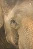 Up close and personal with a Malaysian Elephant at the Lok Kawi Zoological Park, Kota Kinabalu in Sabah, Malaysia.