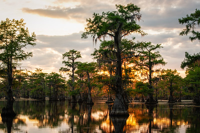 Sunlight on Caddo Lake