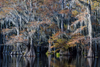 Fall Along the Bayou