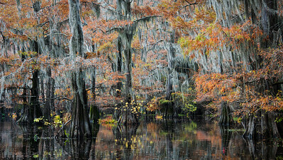 Color on the Bayou