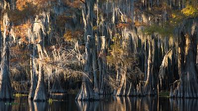 Swamp Mood