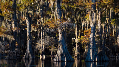 Cypress Mysteries