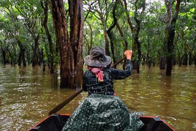 Flooded Forest near Kampong Phluk, Cambodia - 2015