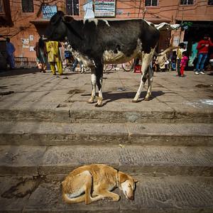 India - 050