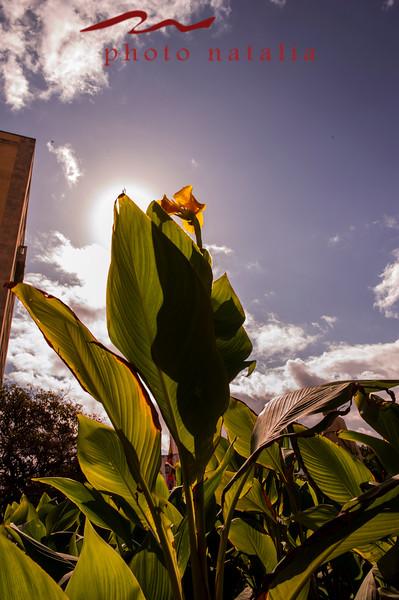 Flowers in front of Hotel Nacional de la Habana.
